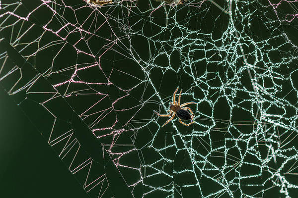 Photograph - Cobwebs Creation by Robert Potts