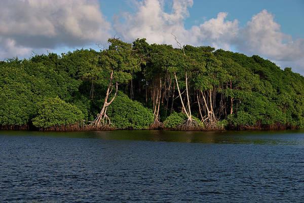 Photograph - Cocal, Manzanilla by Trinidad Dreamscape