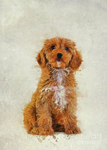 Digital Art - Cockapoo by Ian Mitchell