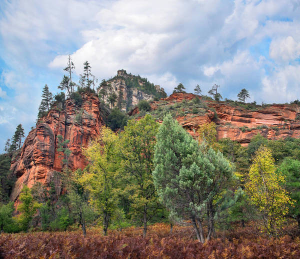 Photograph - Coconino National Forest, Arizona by
