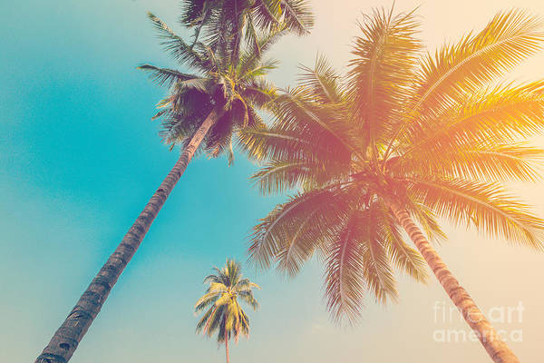 Wall Art - Photograph - Coconut Palm Tree With Vintage Effect by Tortoon