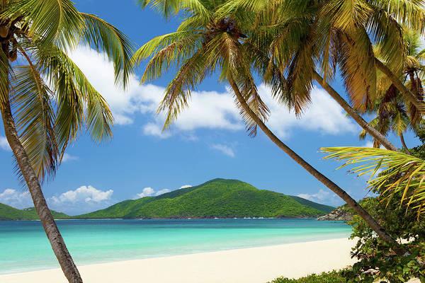 British Virgin Islands Photograph - Coconut Palm Trees At A Tropical Beach by Cdwheatley