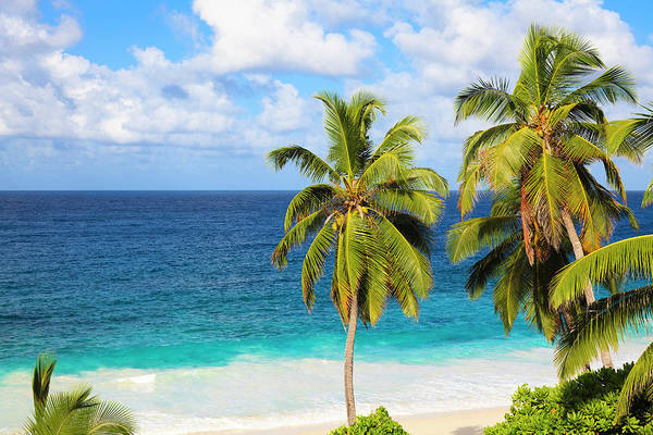 Coconut Trees Photograph - Coconut Palm Trees By The Indian Ocean by Frank Lukasseck
