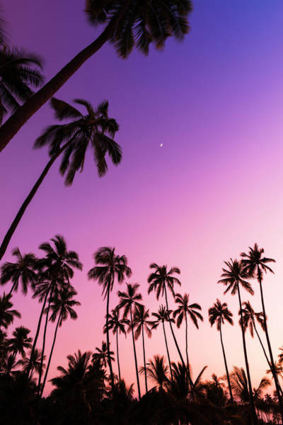 Wall Art - Photograph - Coconut Palms And Moon At Pu'uhonua O by Russ Bishop