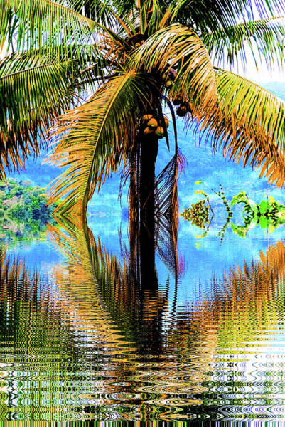 Mixed Media - Coconut Tree by AE collections