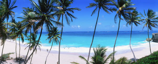 Coconut Trees Photograph - Coconut Trees Along Bottom Bay by Holger Leue