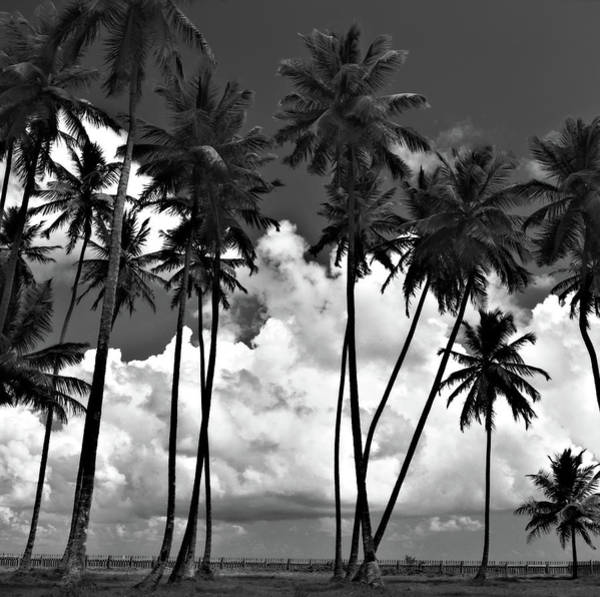 Photograph - Coconut Trees At Mayaro by Trinidad Dreamscape