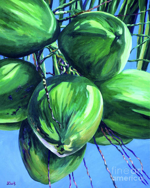Brac Painting - Coconuts In A Palm Tree by John Clark