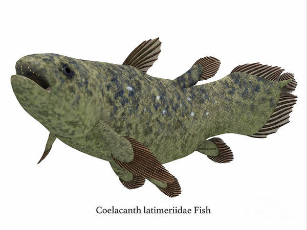 Wall Art - Digital Art - Coelacanth Fish Side Profile With Font by Corey Ford