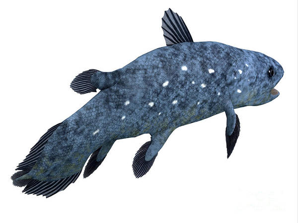 Wall Art - Digital Art - Coelacanth Fish Tail by Corey Ford