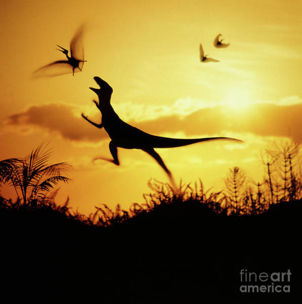 Photograph - Coelurus Leaping At Pterosaur by Warren Photographic