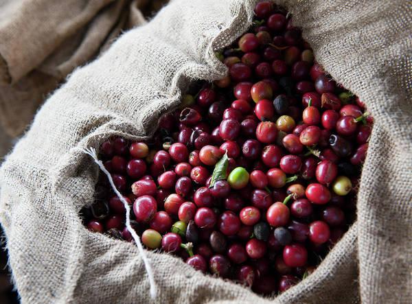 Big Island Photograph - Coffee by Karenmassier