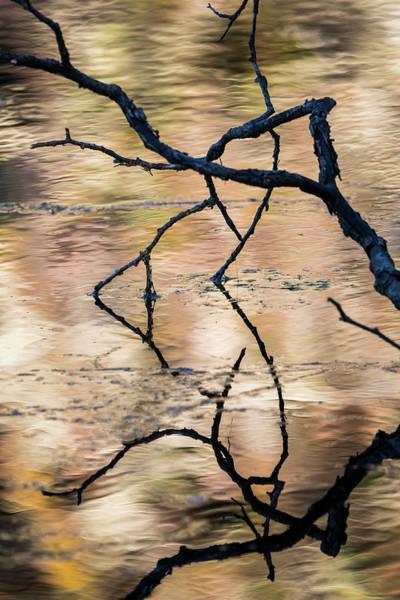 Photograph - Coffenbury Reflections by Robert Potts