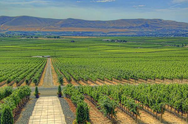 Camera Raw Photograph - Col Solare Vineyards Washington by Brenton Cooper