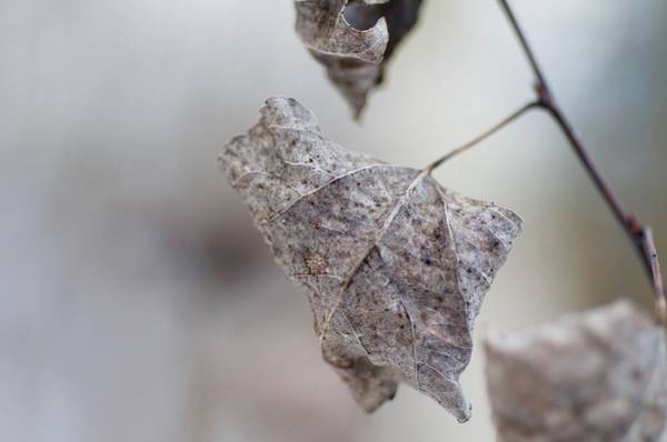 Wall Art - Photograph - Cold Leaf by Greg Hayhoe