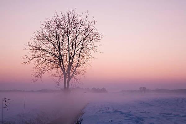 Friuli Photograph - Cold Morning by Mauro grigollo