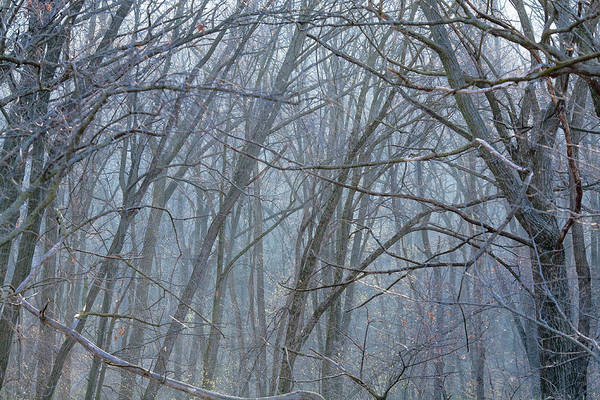 Photograph - Cold Winter Forest by Todd Klassy