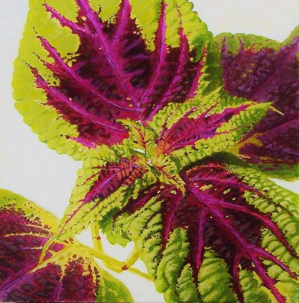 Wall Art - Painting - Coleus I by Susan Schneider