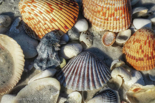 Wall Art - Photograph - Collection Of Seashells by Kathi Isserman