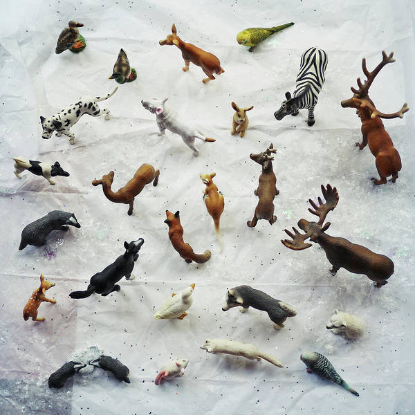 Moose Art Photograph - Collection Of Small Toy Animals Viewed by Fiona Crawford Watson