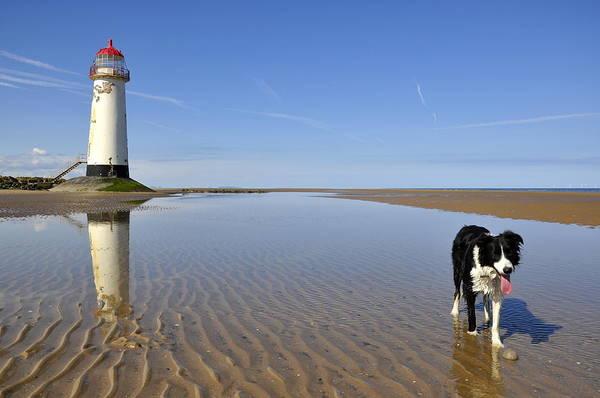 Wet Sand Photograph - Collie Dog On Beach by Photos By R A Kearton