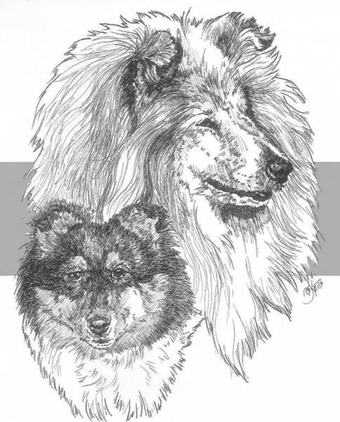 Drawing - Collie - Rough Coat - And Pup by Barbara Keith
