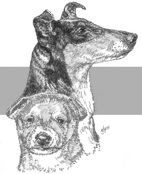 Drawing - Collie - Smooth Coat - And Pup by Barbara Keith