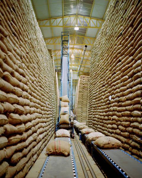 Warehouse Photograph - Colombia, Narino, Pasto, Sacks Of by Livia Corona