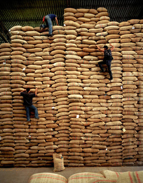 Wall Art - Photograph - Colombia, Workers Scaling Wall Of Sacks by Livia Corona