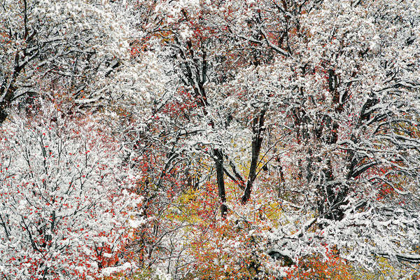 Late Autumn Wall Art - Photograph - Color And Snow 1 by Leland D Howard
