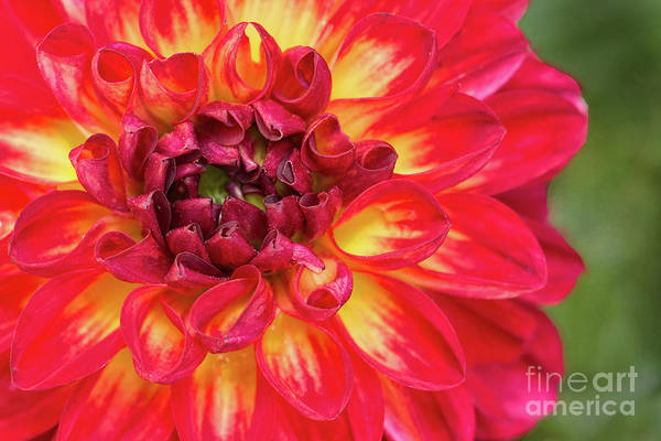 Wall Art - Photograph - Color Blast by Michelle Tinger
