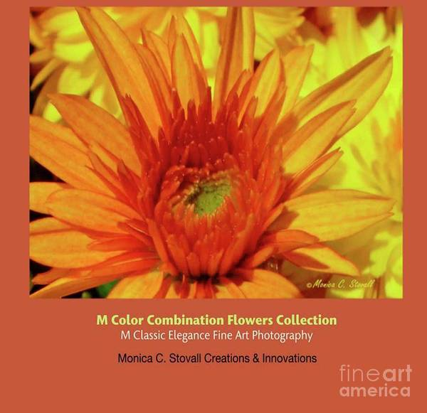 Photograph - Color Combination Flowers Collection by Monica C Stovall