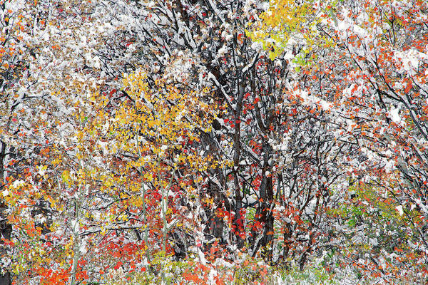Photograph - Color by Leland D Howard