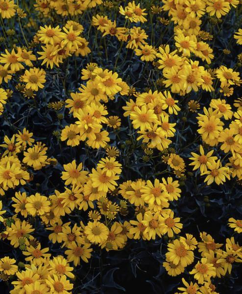 Photograph - Color Me Yellow by Paul Breitkreuz