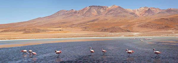 Wall Art - Photograph - Colorada Lagoon by Luis Davilla