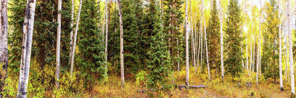 Photograph - Colorado Autumn Wonder Panorama 2  By Olena Art  by OLena Art Brand