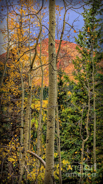 Photograph - Colorado Colors by Janice Pariza