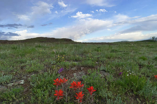 Photograph - Colorado Evening Paintbrush And Sky Landscape by Cascade Colors