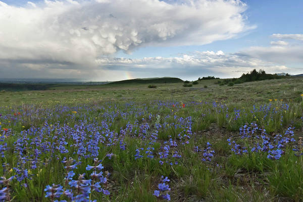 Photograph - Colorado Evening Wildflower And Cloud Landscape by Cascade Colors