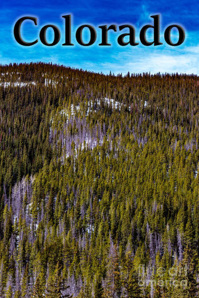 Photograph - Colorado Forested Hillside by G Matthew Laughton