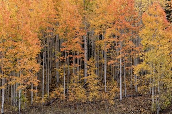 Photograph - Colorado Guardians by Angela Moyer