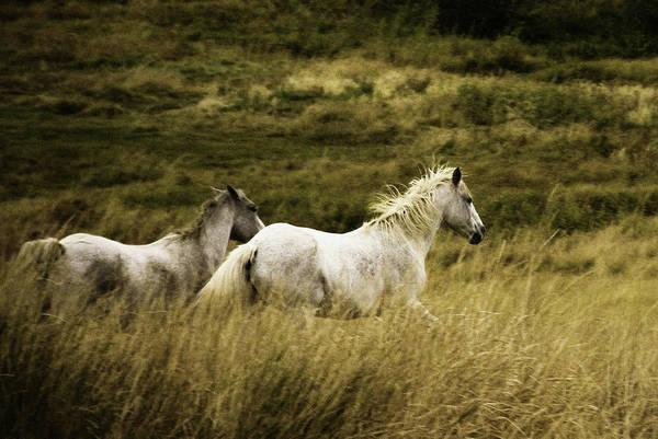 Wall Art - Photograph - Colorado Horses by Mary Hockenbery
