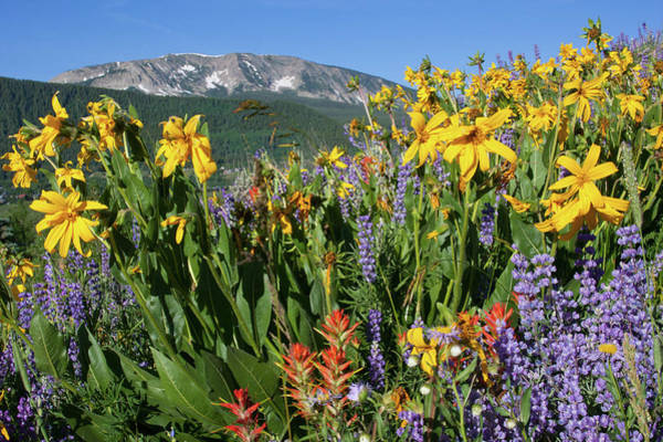 Photograph - Colorado Rainbow Of Wildflowers Landscape by Cascade Colors