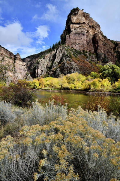 Photograph - Colorado River Aspens In Color by Ray Mathis