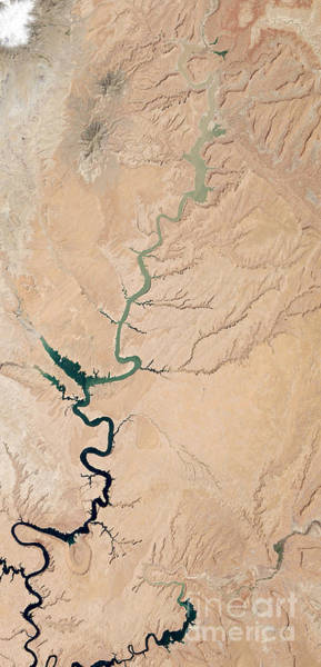 Photograph - Colorado River In Drought by NASA Earth Observatory Robert Simmon