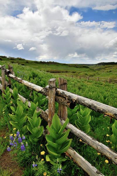 Photograph - Colorado Wildflower Season by Ray Mathis