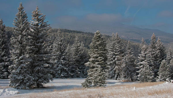 Photograph - Colorado Winter Trees And Lifting Clouds by Cascade Colors
