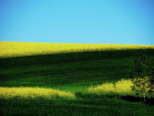 Photograph - Colored Landscape 1 by Jorg Becker