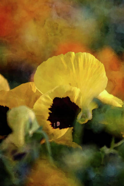 Photograph - Colorful 8708 Idp_2 by Steven Ward