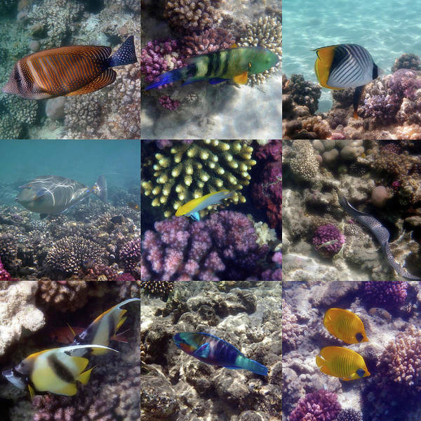 Photograph - Colorful And Exotic Underwater Sealife Collage by Johanna Hurmerinta